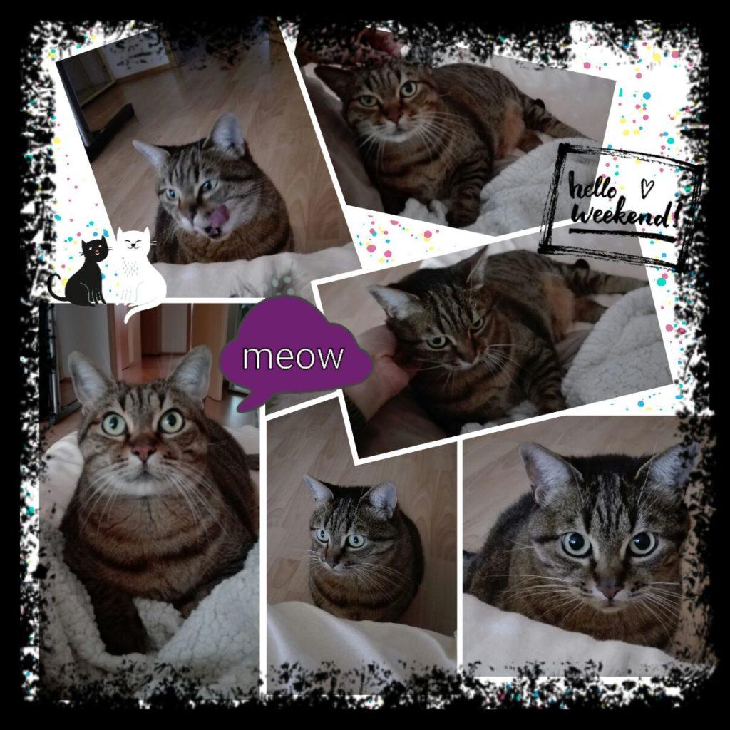 fotokoláž Meow-sitting, hlídání koček Praha, Příbram, Dobříš, Mníšek pod brdy