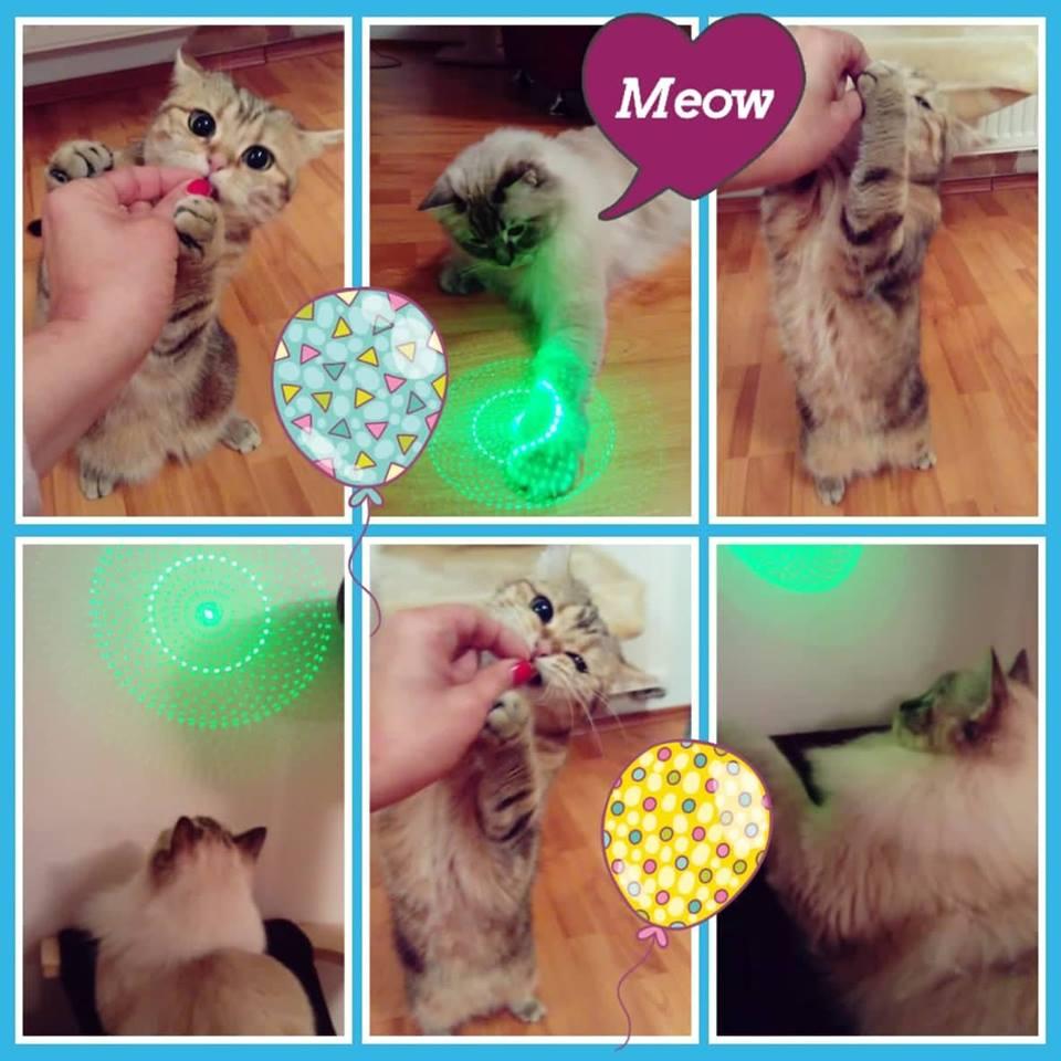 fotokoláž meow-sitting hlídání koček