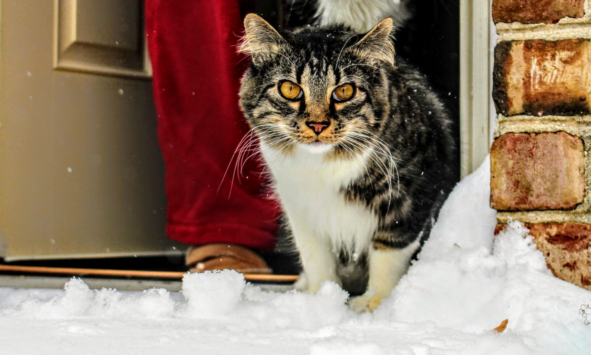 Kočka jde v zimě ven do sněhu