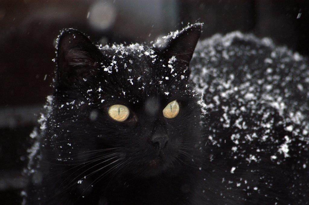 úvodní obrázek ke článku kočky v zimě