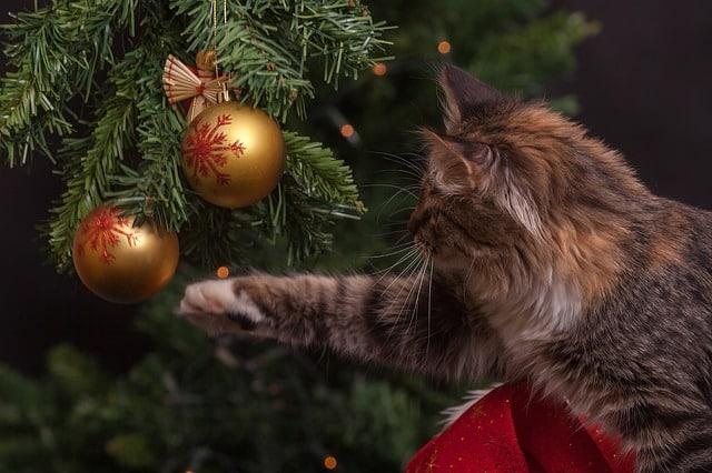 kočka a vánoční stromek