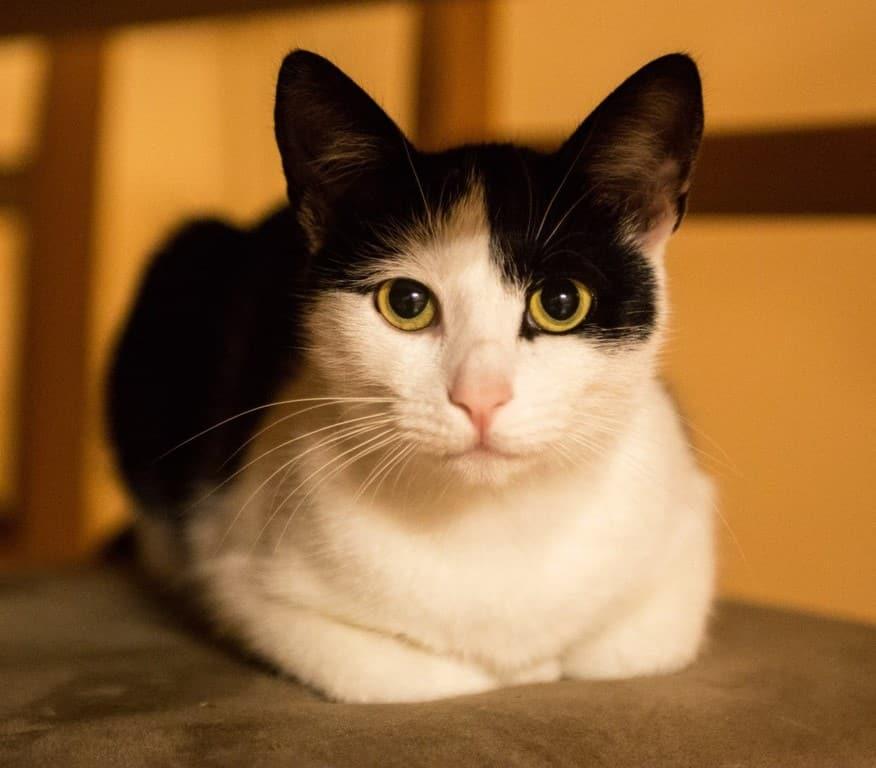 Kočka Mia meow chůvy Jany
