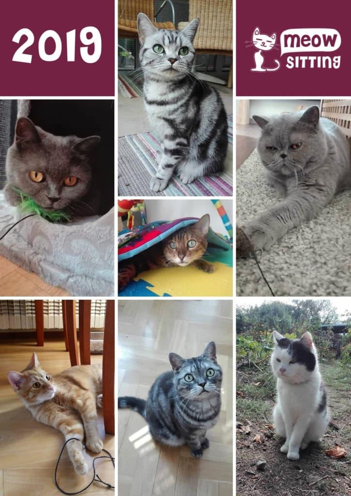 kalendář s kočkami Meow-sitting