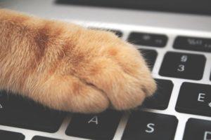 objednat hlídání koček přímo u vás doma