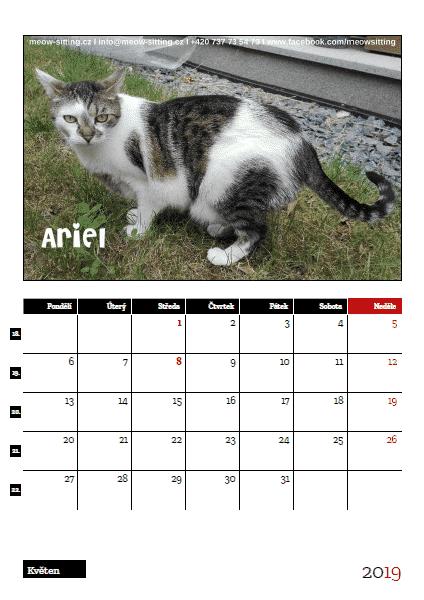 kočičí kalendář s kočkami Meow-sitting