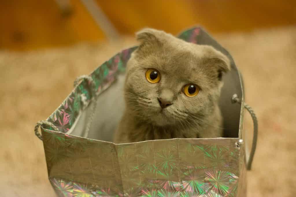 dárky pro milovníky koček, titulní fotka