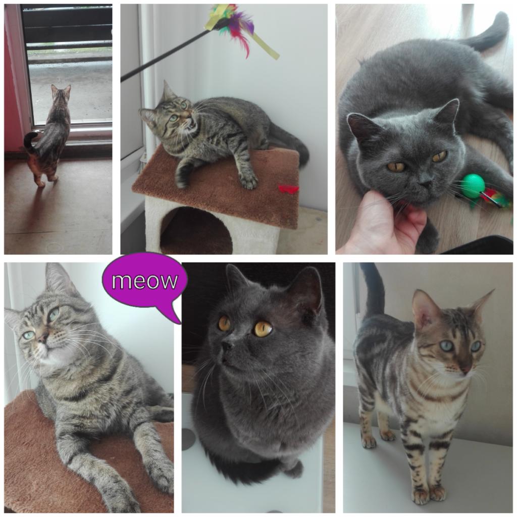 Meow-sitting, koláž z hlídání koček 3